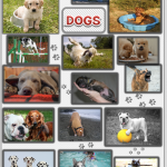 dog poster 2